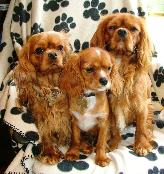 Panton Dog Kennels